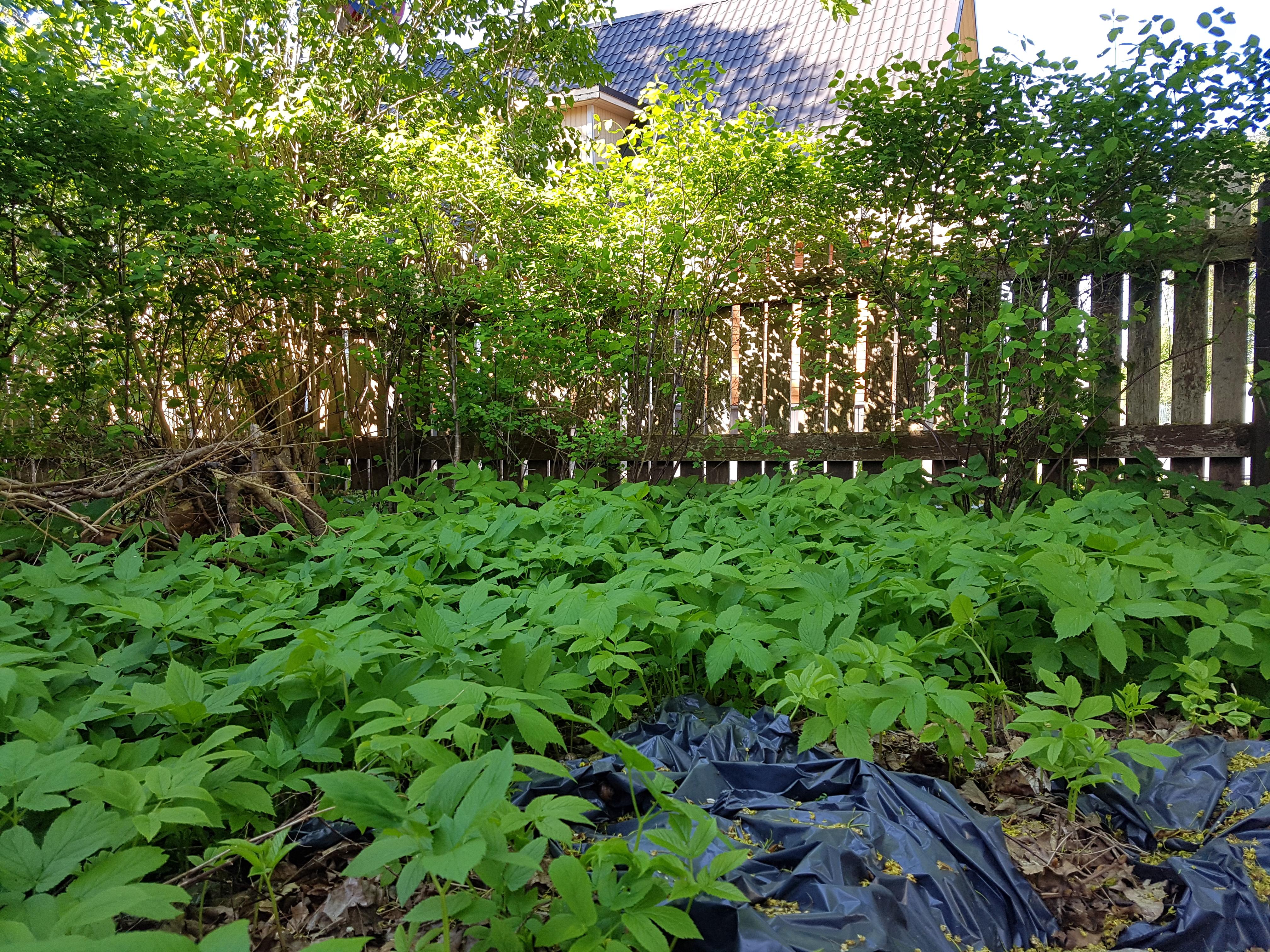 naat, võsa, kompost,aiatööd, appi,